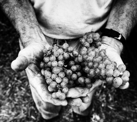 """""""Dal germoglio della vite al nettare nel bicchieri"""" – Mostra Fotografica di Mirko Borselli"""